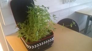 klein_puutarha